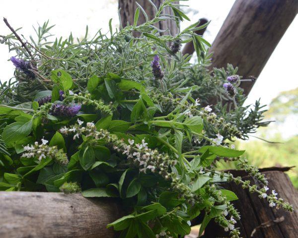 Benvenuti al Poison Garden: Le radici medievali della medicina